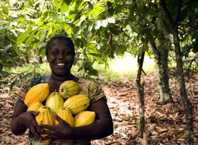 4 bonnes raisons d'investir dans l'agroalimentaire en Afrique